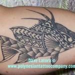 hogfish2